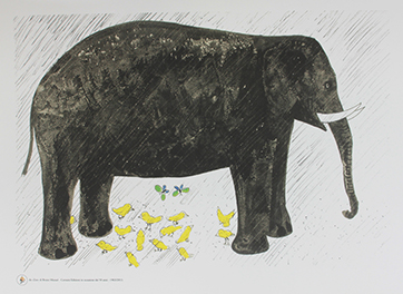 elephant web