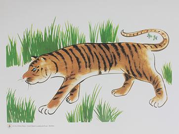tiger web
